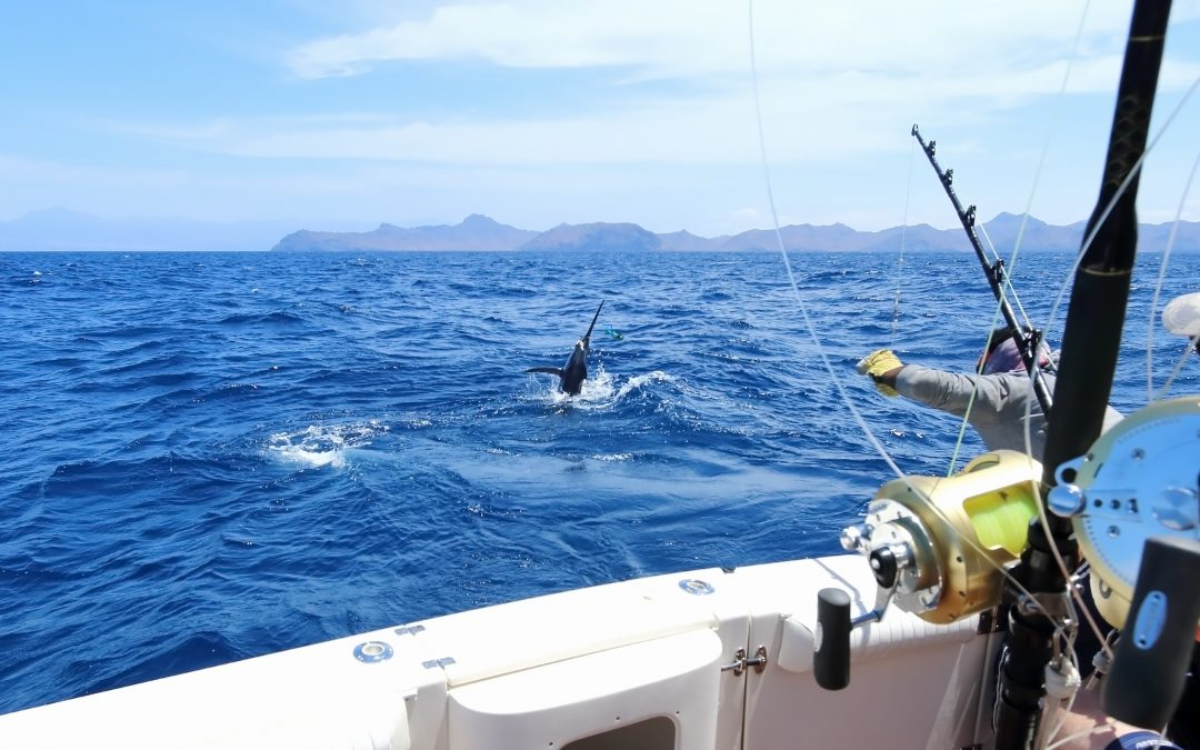 A Quick Guide to Salt Water Fishing